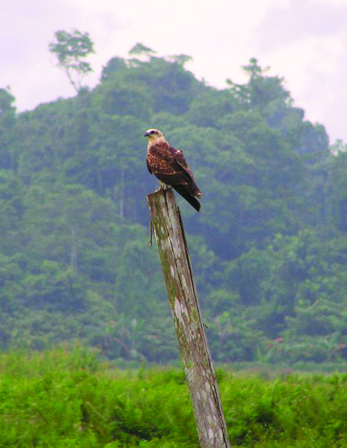 A Bird is perched near a project site.